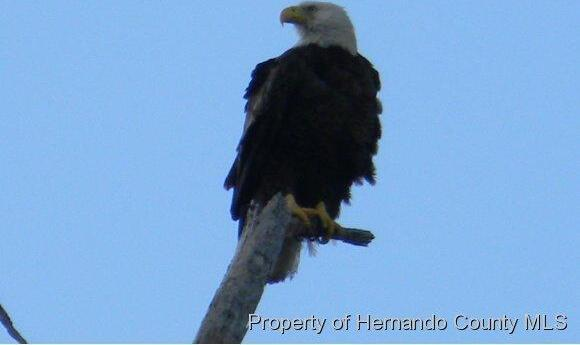 8292 Driftwood Dr., Weeki Wachee, FL 34607 Photo 5