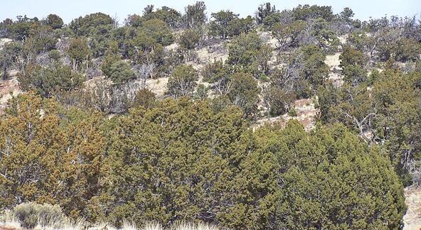 1843 E. Sagebrush Rd., Williams, AZ 86046 Photo 4