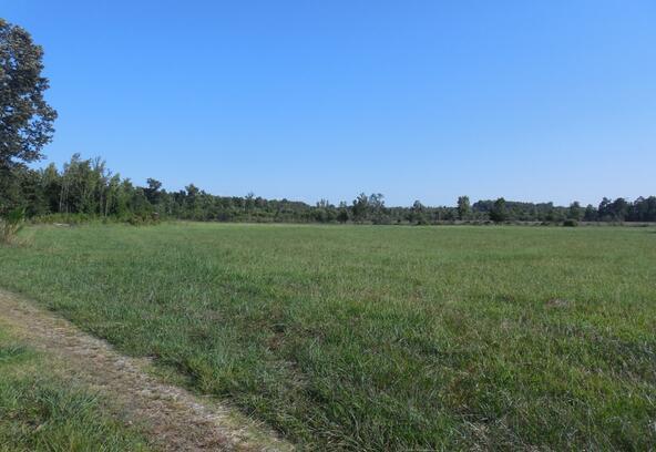6028 County Rd. 565, Hanceville, AL 35077 Photo 4