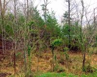 Home for sale: 11-Lot Dawn Dr., Morehead, KY 40351