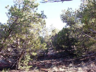 54867 N. Presidio Parkway, Seligman, AZ 86337 Photo 2