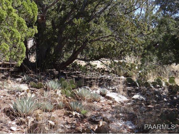 808 Sierra Verde Ranch, Seligman, AZ 86337 Photo 5