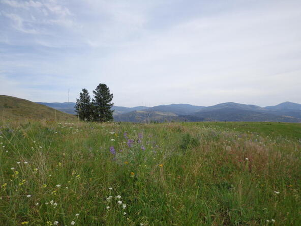 B-U Graves Mt. Rd., Curlew, WA 99118 Photo 15