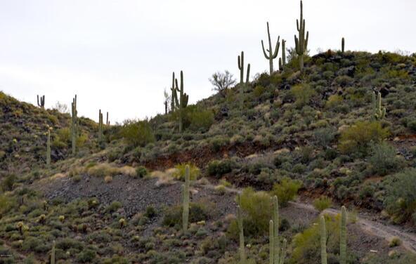 374xx N. Schoolhouse Rd., Cave Creek, AZ 85331 Photo 23