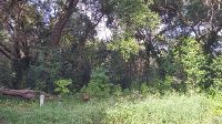 Home for sale: 402 Acorn Cir., Fruitland Park, FL 34731