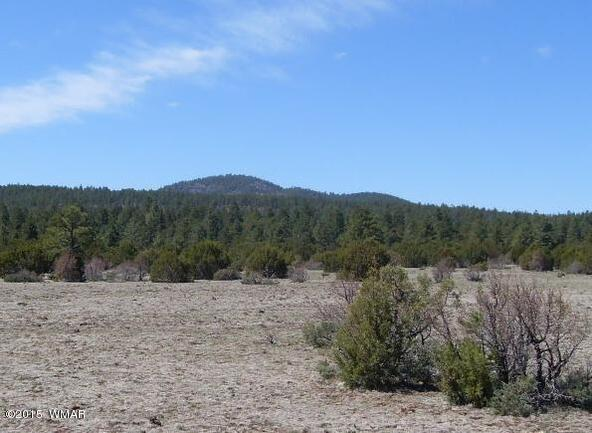 40.88 Acre Of 106-36-034-I, Vernon, AZ 85940 Photo 5