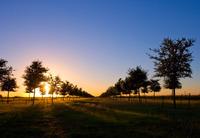 Home for sale: 610 W. Berkeley Cir., Sunnyvale, TX 75182
