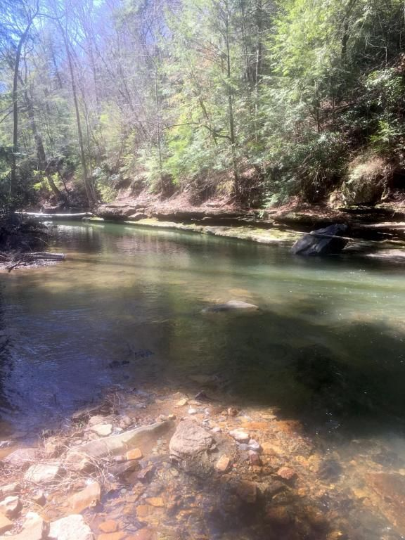 526 County Rd. 139, Bryant, AL 35958 Photo 104