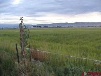 Home for sale: Lot 40b 5950 Rd., Olathe, CO 81425