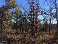 Home for sale: 275 Tower Rd., Vilonia, AR 72173