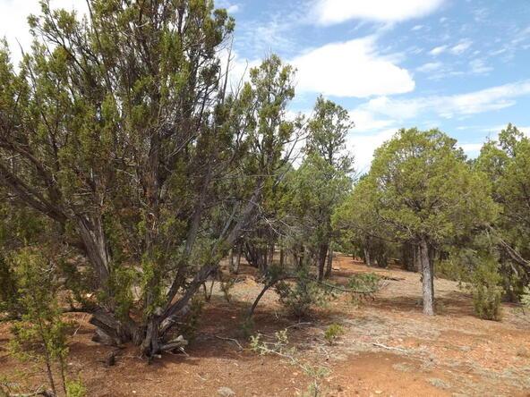 2374 Wildcat Cir., Overgaard, AZ 85933 Photo 6