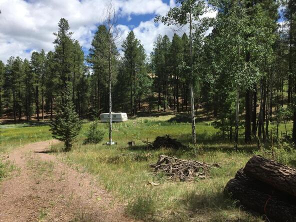 29 Cr 2266, Alpine, AZ 85920 Photo 13