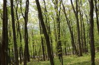 Home for sale: Lot 25 Storkers Knob Rd., Floyd, VA 24091