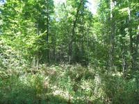 Home for sale: 157 Acres State Hwy. 52, Pickerel, WI 54465