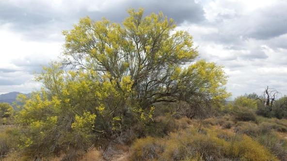 163 E. Dixileta Dr., Scottsdale, AZ 85262 Photo 5