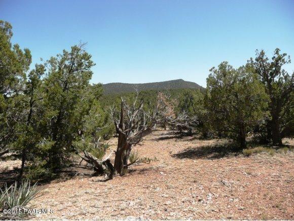 1024 Sierra Verde Ranch, Seligman, AZ 86337 Photo 22