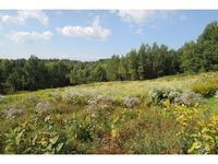 Home for sale: 00 Bear Mountain/Farrar Rd., Newport Center, VT 05857