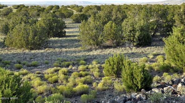 199.54 Acres, Concho, AZ 85924 Photo 13