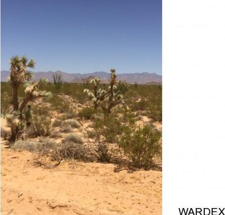 71 Appaloosa Rd., Yucca, AZ 86438 Photo 5
