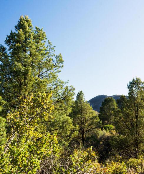17955 W. Buckhorn Dr., Peeples Valley, AZ 86332 Photo 31