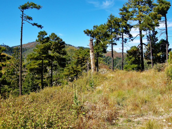 12717 N. Upper Loma Linda, Mount Lemmon, AZ 85619 Photo 13