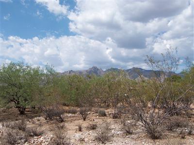 2420 Camino Miraval, Tucson, AZ 85718 Photo 3