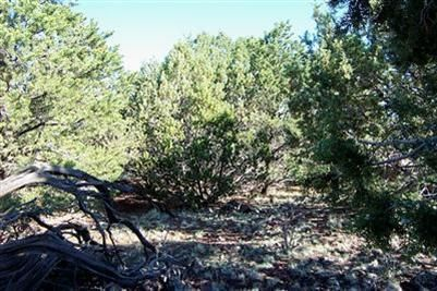 1419 W. Maverick Ln., Williams, AZ 86046 Photo 3