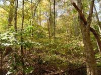 Home for sale: 0 Hwy. 64 Powder Mill Hill, Pulaski, TN 38478