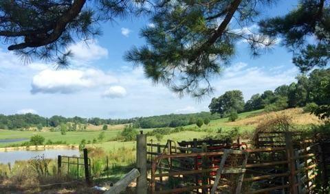 31159 Alabama Hwy. 71 Hwy, Bryant, AL 35958 Photo 42