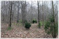 Home for sale: 8000 Old Harding Pike, Nashville, TN 37221