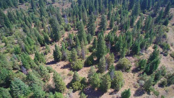 Lot 6 Forest Highlands, Boise, ID 83716 Photo 12