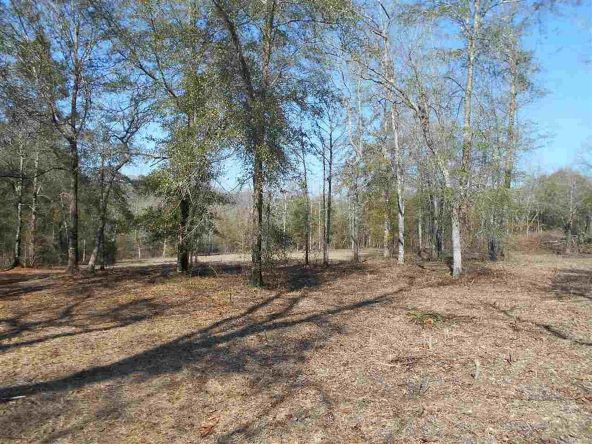16.9 Acres Private Rd. 1363, Ariton, AL 36311 Photo 27