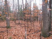 Home for sale: 0 Huggins Rd. Lot 4, Tyrone, NY 14887