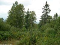Home for sale: Lot 23 Moose Ridge Rd., Rangeley, ME 04970