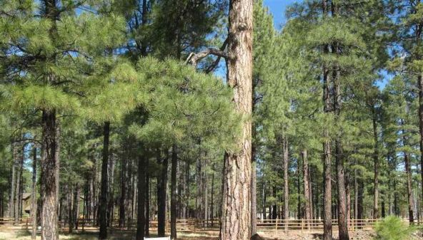 2543 Greens Peak Ln., Pinetop, AZ 85935 Photo 1