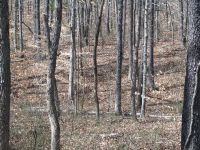 Home for sale: 0 County Line Rd., Fairview, TN 37062