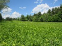 Home for sale: Lot 2 Gendron Rd., North Troy, VT 05859