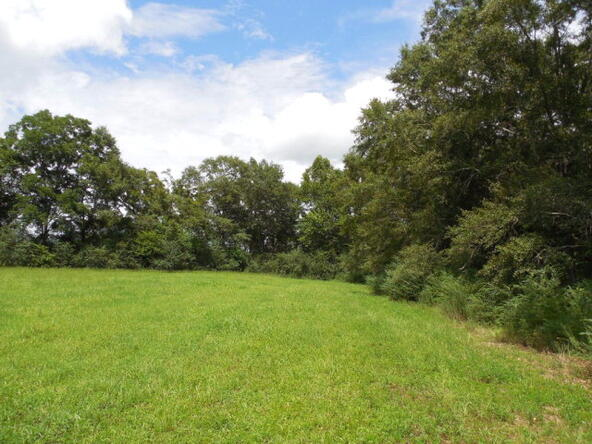 3 Acres Hwy. 103, Slocomb, AL 36375 Photo 6