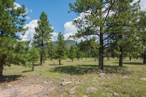 8r Lockett Ranches, Flagstaff, AZ 86001 Photo 14