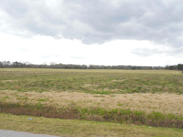 95 Acres Hwy. 84, Dothan, AL 36312 Photo 6