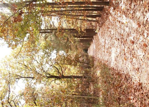 18509 Parks Cemetery Rd., Winslow, AR 72959 Photo 29