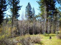 Home for sale: 963 Smith Lake Rd., Graeagle, CA 96103