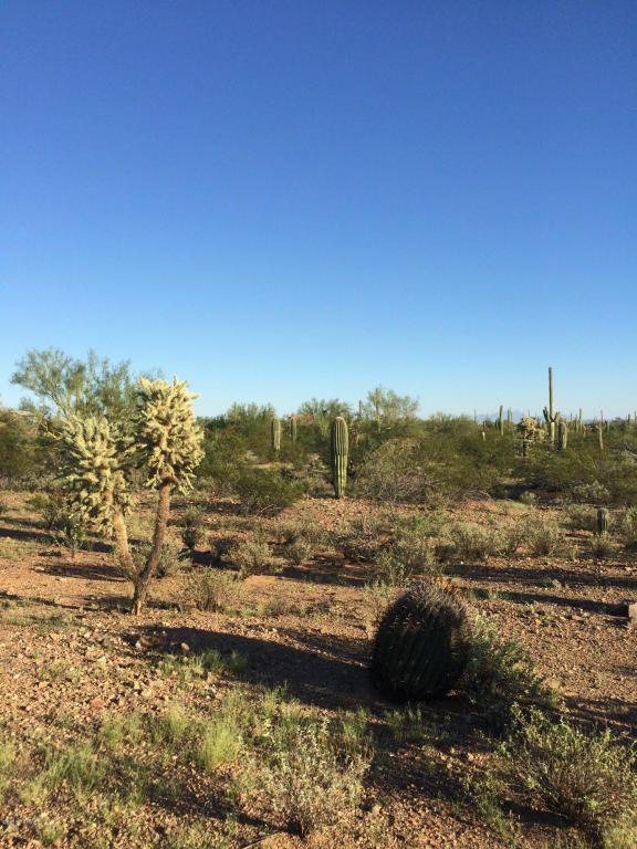 11715 Tortoise Trail, Tucson, AZ 85743 Photo 4