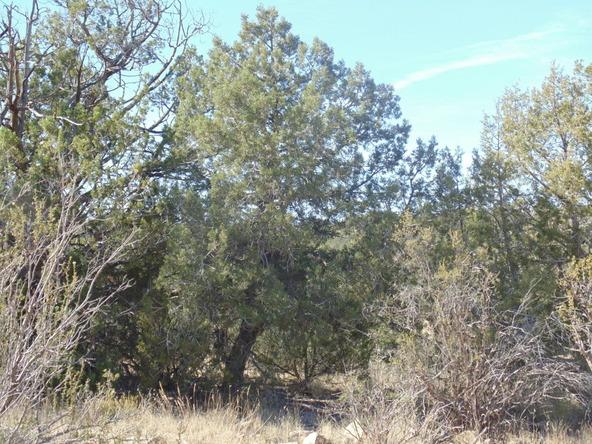 57154 N. Bridge Canyon Parkway, Seligman, AZ 86337 Photo 8