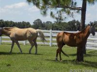 Home for sale: 710 Hammett Ln., New Smyrna Beach, FL 32168