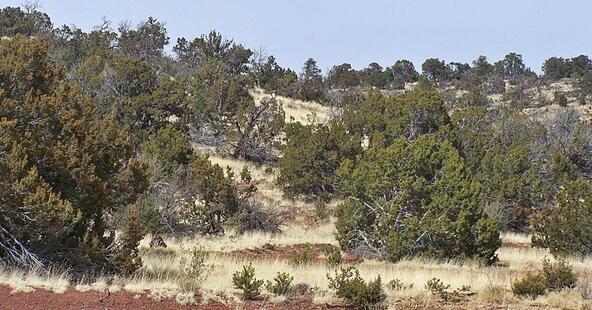 1843 E. Sagebrush Rd., Williams, AZ 86046 Photo 3