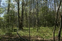 Home for sale: Lot 38 S. Falls Creek Rd., Lake Lure, NC 28147