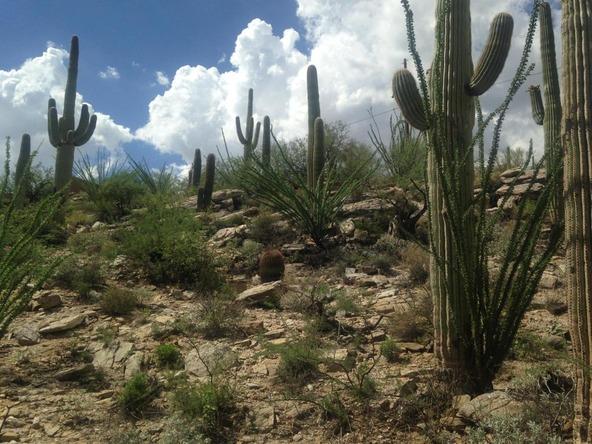 11900 E. Ponce de Leon, Tucson, AZ 85749 Photo 3