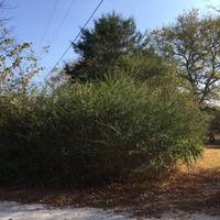 Home for sale: 0 Huntsville Hwy., Fayetteville, TN 37334