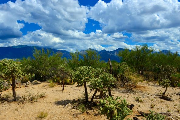 14601 N. Quiet Rain Dr., Oro Valley, AZ 85755 Photo 13